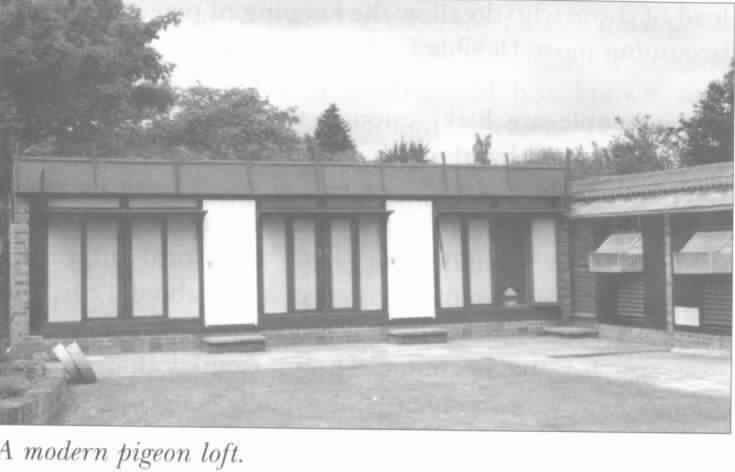 A Modern Loft
