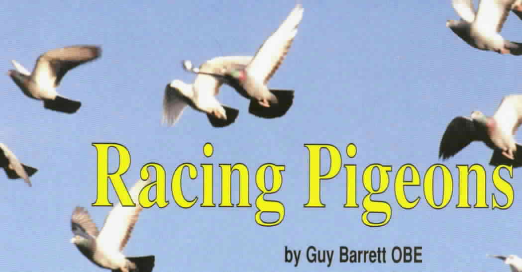Racing Pigeons by Guy Barrett OBE